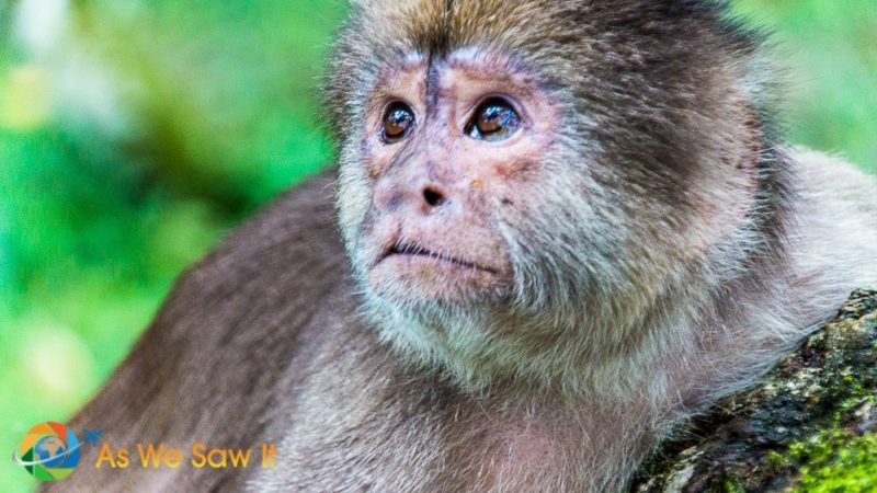 Closeup of a cute monkey in the Amazon