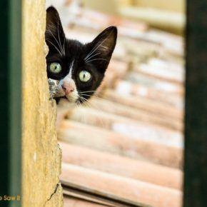 Cat in Corfu