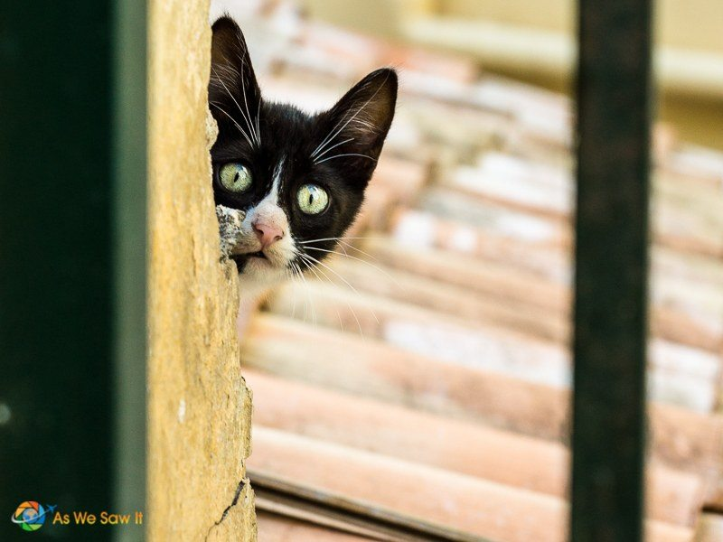 Cat playing peek-a-boo from a rooftop in Corfu, Greece