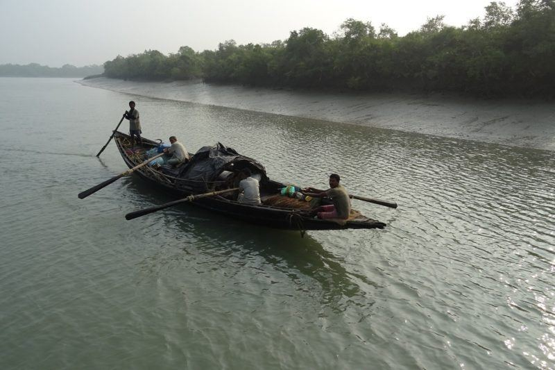 Four men row a long wooden boat in the sundarbans