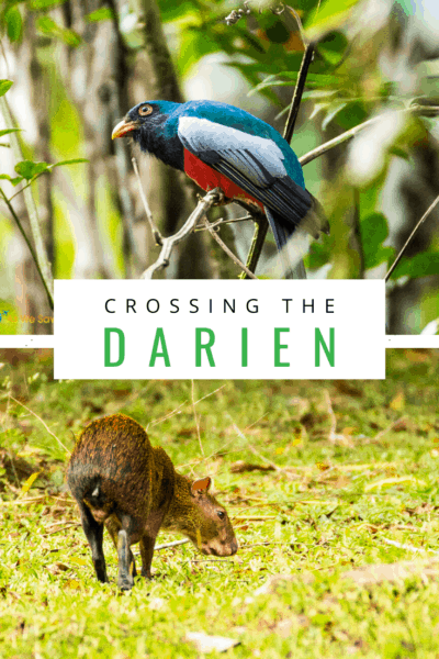 colorful bird and an agouti text says crossing the darien
