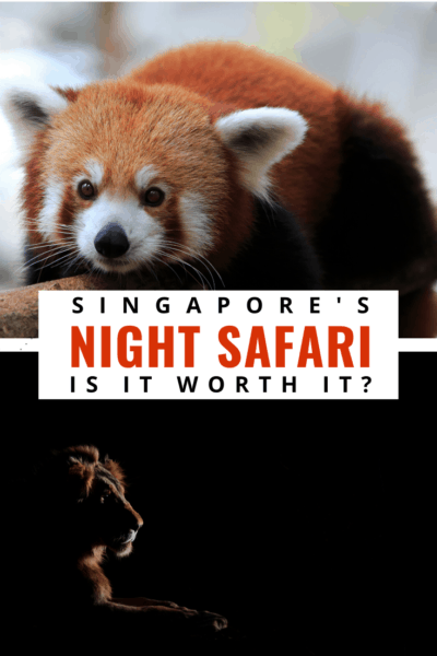 red panada and male lion text says singapore's night safari, is it worth it?