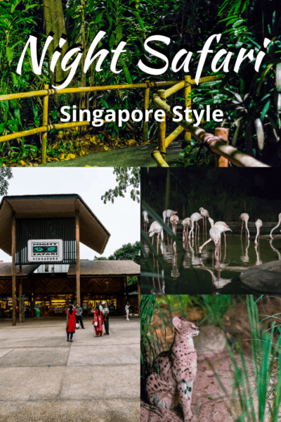 collage of animals text says night safari singapore style