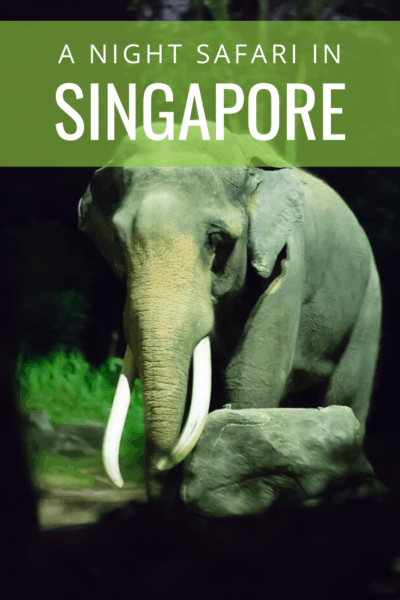 large elephant text says a night safari in singapore