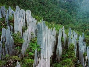 Pinnacles at Gunung Mulu National Park