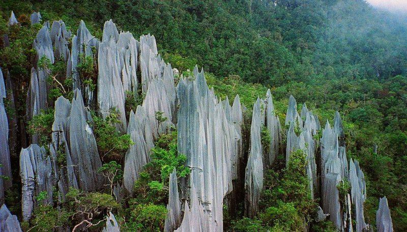 Pinnacles at Gunung Mulu National Park