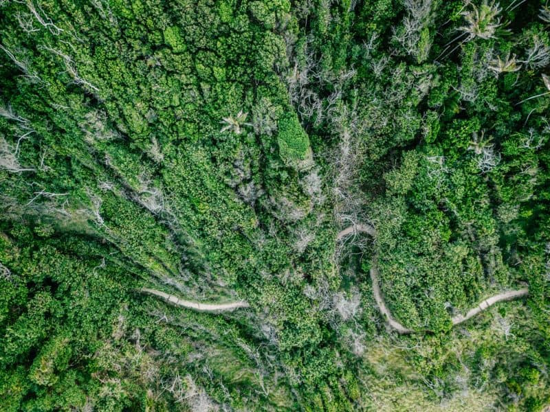aerial view of trees and a road in the rainforest