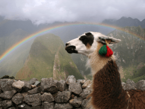 Closeup of llama's head and neck with a rainbow and Machu Picchu.in the background