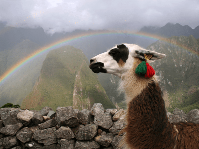Closeup of llama's head and neck framed by a rainbow. Rock wall and Machu Picchu.in the background