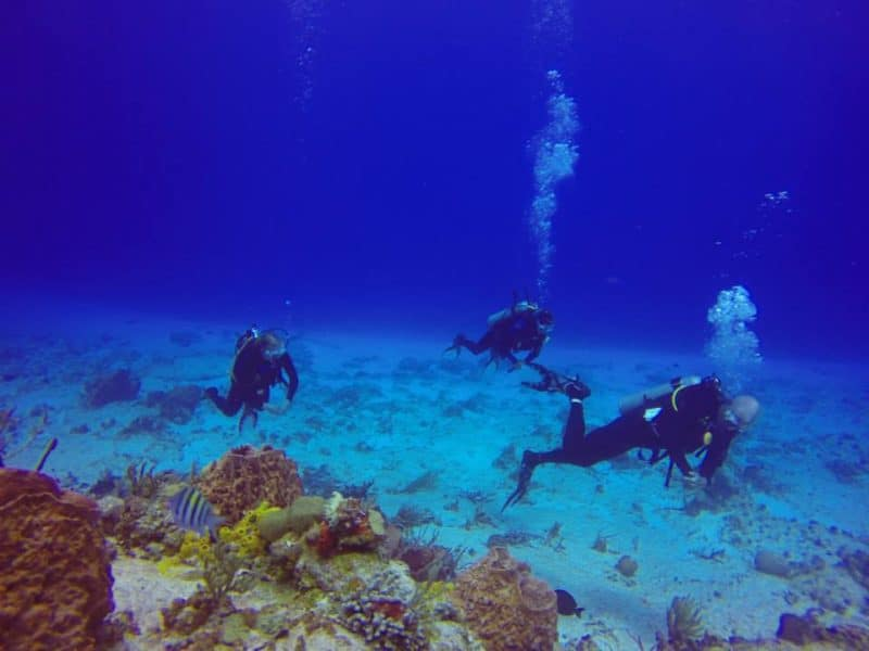 Three divers with coral reef and caribbean fish in the foreground