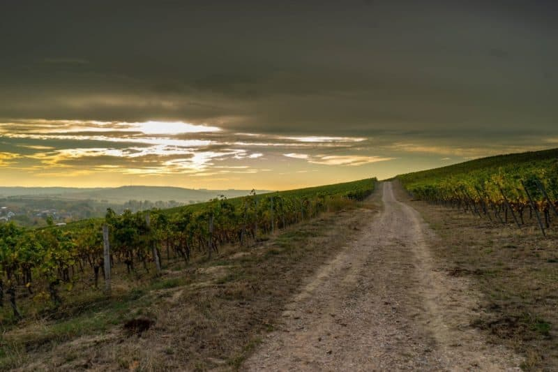 road and vineyards in Cotswolds