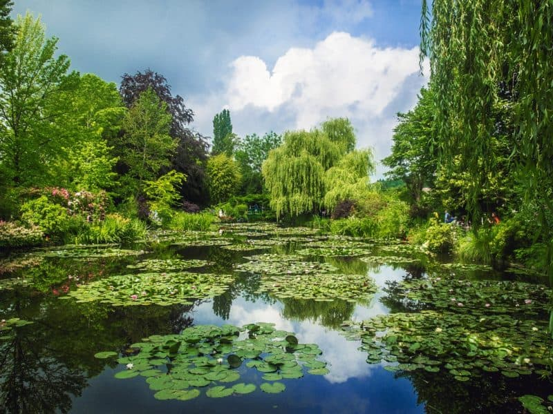 Waterlilies and lake in Monet's garden, willows in the background