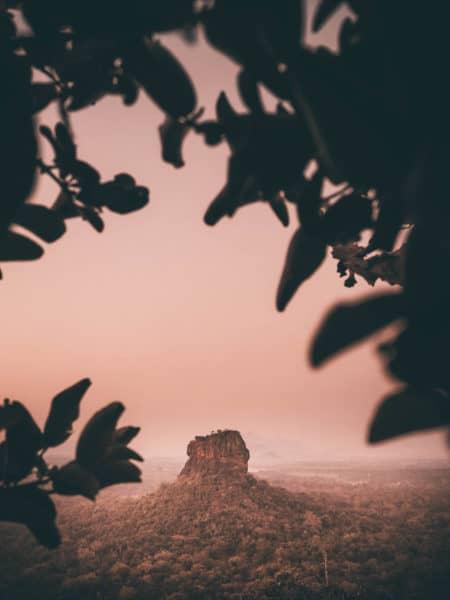 Tree leaves framing Sigiriyal Rock in background