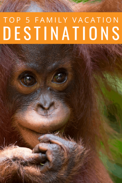baby orangutan text reads top 5 family vacation destinations