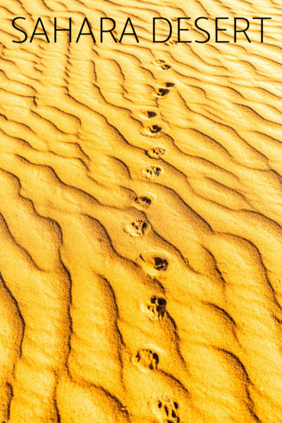 red sands of the sahara desert with animal tracks