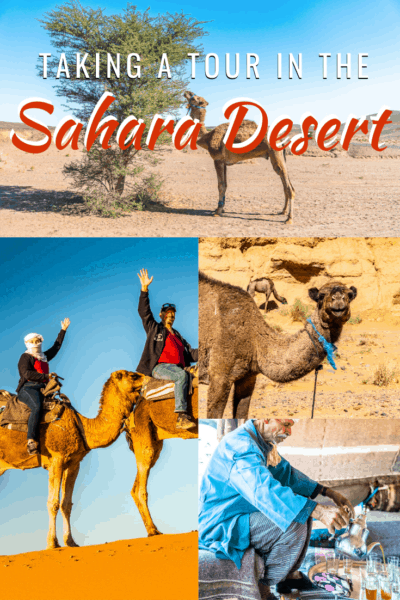 collage of camels and bedouin opouring tea text says how to take a tour in the sahara dessert