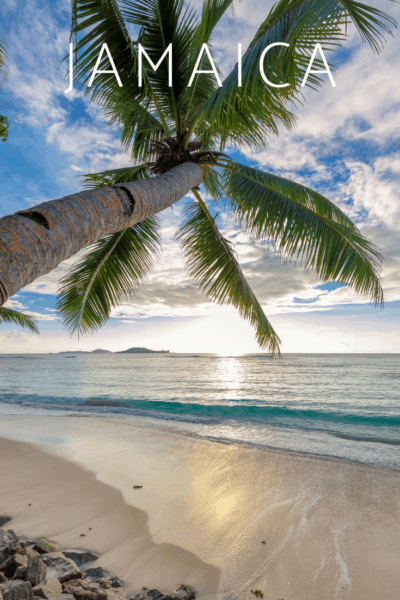 palm tree over caribbean sea at sunset