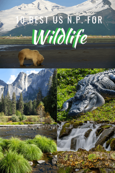 collage of wild animals text says 10 best national parks for wildlife