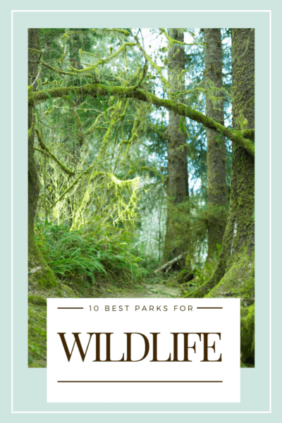 trees in olympic national park text says 10 best national parks for wildlife