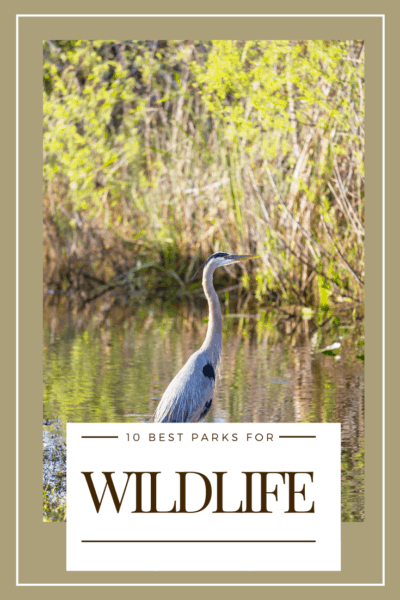 blue heron text says 10 best national parks for wildlife