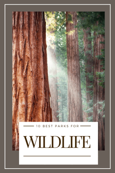 redwood trees text says 10 best national parks for wildlife