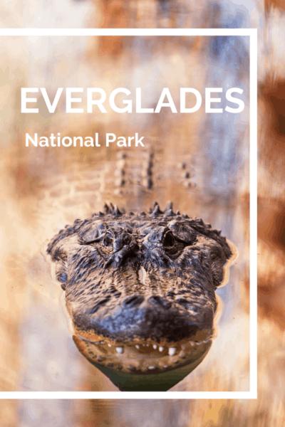 alligator text says everglades national park
