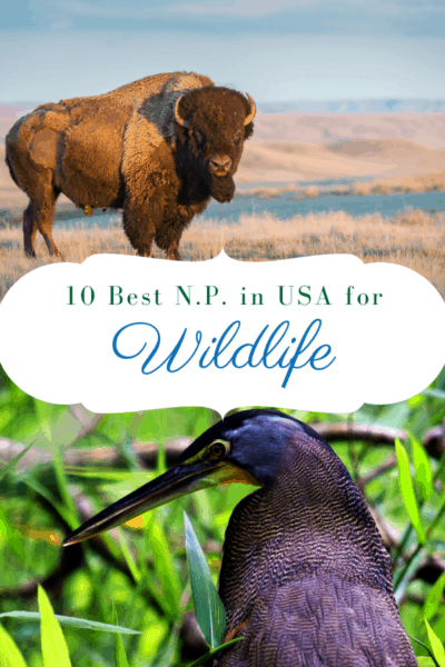bison and heron text says 10 best national parks in usa for wildlife