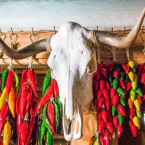 bull skull with red and green drying chilis