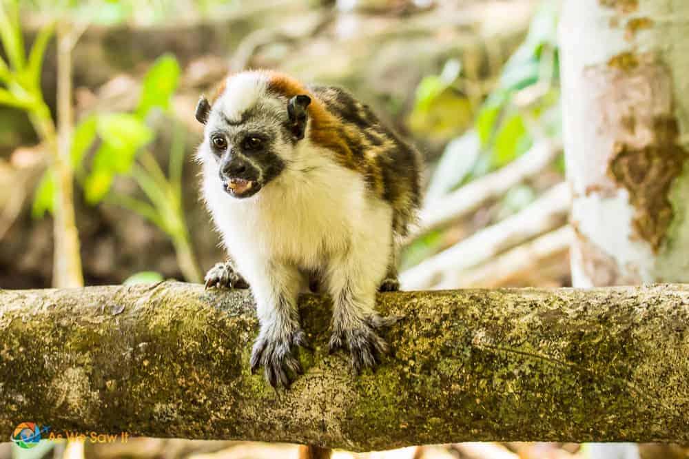 monkey visiting our boat on Lake Gatun Panama