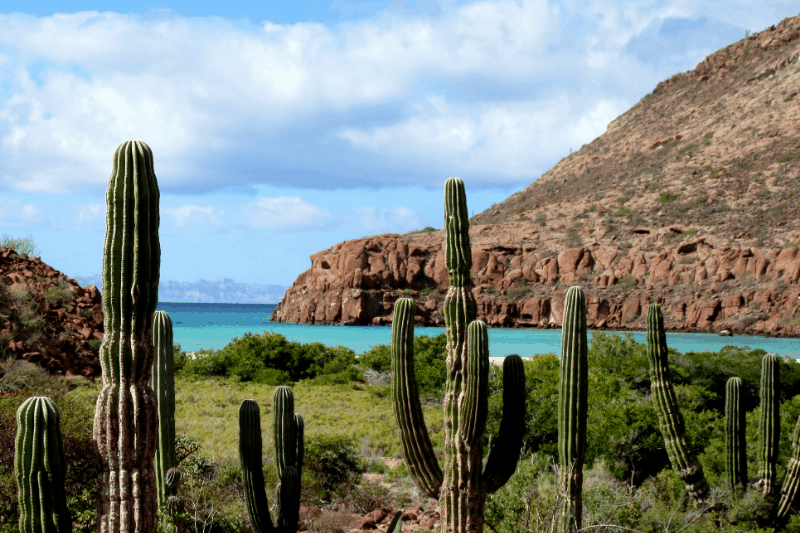 Cactus in foreground with a view to the water in Ensenada mexico