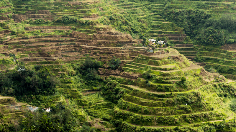 Rice terraces, carved into the mountains in Banaue, Philippines.
