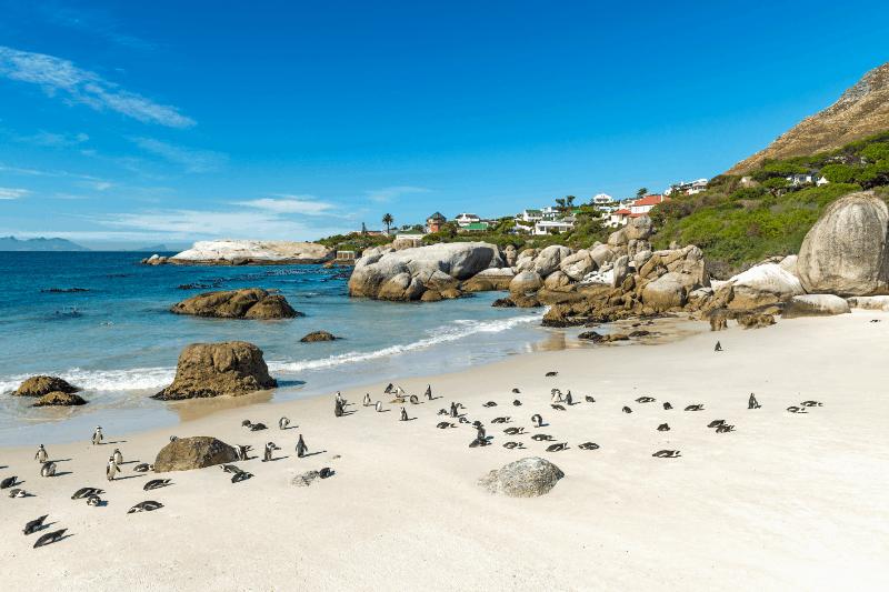 seals on the beach during a african beach safari