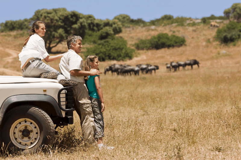 Family on safari in Africa. Mom sits on  the hood of a Jeep while father and daughter stand in front. Herd of animals in background.