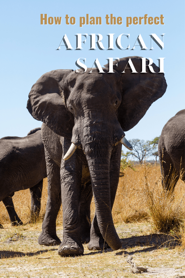 African elephant on savanna. Overlay text says how to plan the perfect African safari
