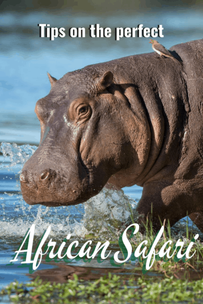 hippo text says tips of the perfect african safari