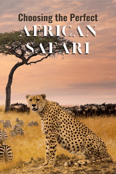 cheetah text says choosing the perfect african safari