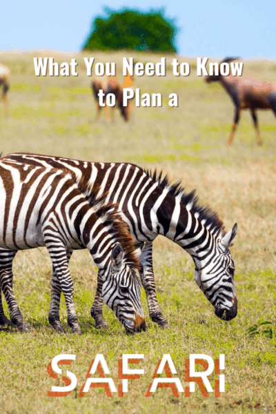 zebras text says what you need to know to plan a safari
