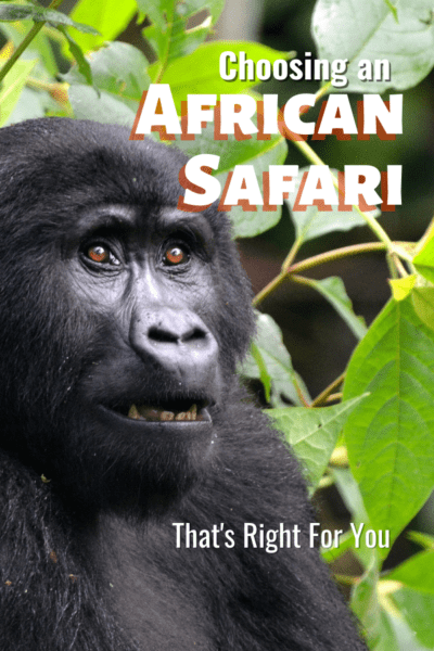 mountain gorilla text says choosing an african safari that's right for you