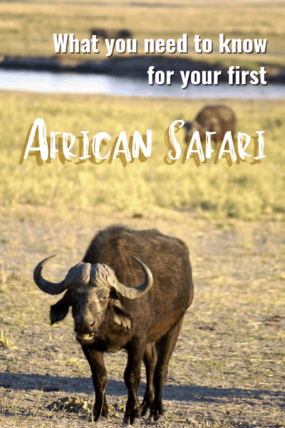 cape buffalo text says what you need to know for your first african safari