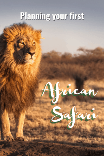 male lion text says planning your first african safari
