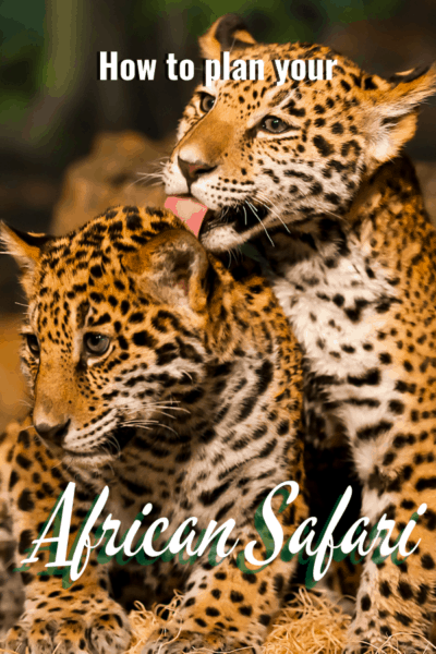 baby leopards text says how to plan your african safari