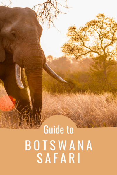Elephant at sunrise text says guide to botswana safari