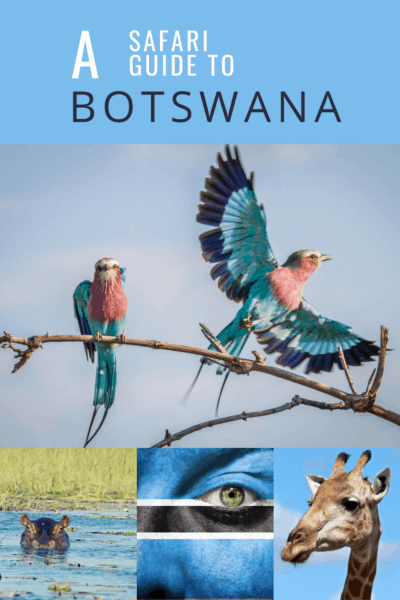 Colorful bird and collage of other safari animals text says a safari guide to botswana