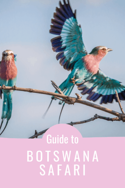 Colorful bird in flight text says guide to botswana safari