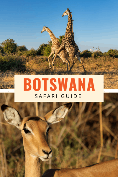 Giraffes and gazelle text says botswana safari guide