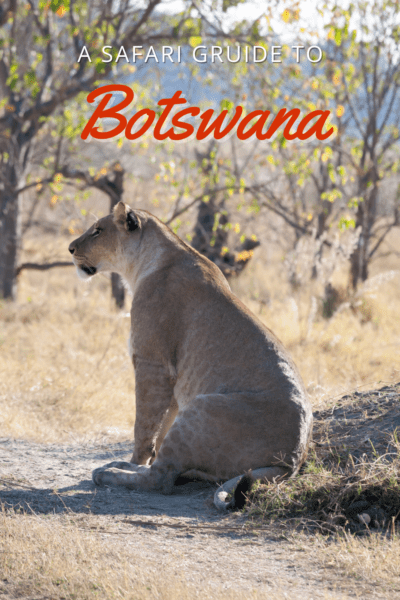 Lion resting in the shade text says a safari guide to botswana