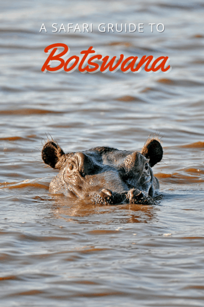 hippo in water text says a safari guide to botswana