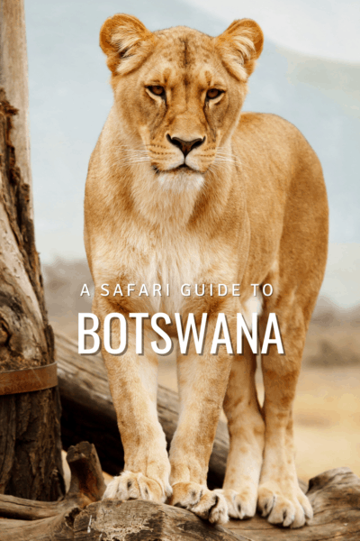lioness text says a safari guide to botswana
