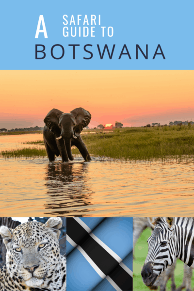 Elephant and collage of other safari animals text says a safari guide to botswana