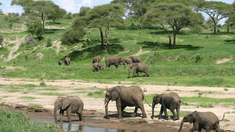 Elephants approaching Chobe River